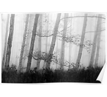 Forest in the autumn mist Poster