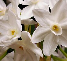 Narcissus:  Pining for Love by Rebecca Bryson