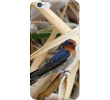 Welcome Swallow - CHC - NZ iPhone Case/Skin
