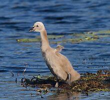 Little Wings by byronbackyard