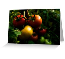 Home Grown Tomatoes Greeting Card