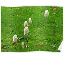 Fungi -  Poster