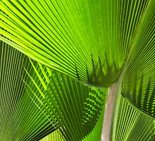 Palm fronds by Yves Rubin