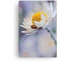 Ladybird and Daisy Canvas Print