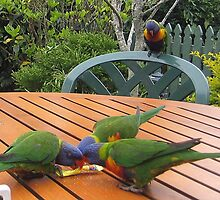 Birds eating sugar from a packet by Marilyn Baldey