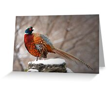 Ring-Necked Pheasant Greeting Card