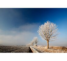 Stoke Frost 4 Photographic Print