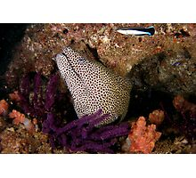 Moray Photographic Print
