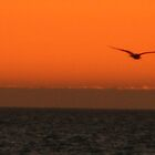 right afta sunset on pine island by sirfinepix27