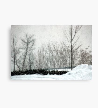 The Weight of Snow Canvas Print