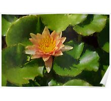 Warm Yellows, Oranges and Corals - a Waterlily Impression Poster