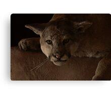 Magnificent Exciting Dangerous - The Mountain Lion Canvas Print