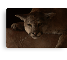 Magnificent Exciting Dangerous - The Mountain Lion Canvas Print