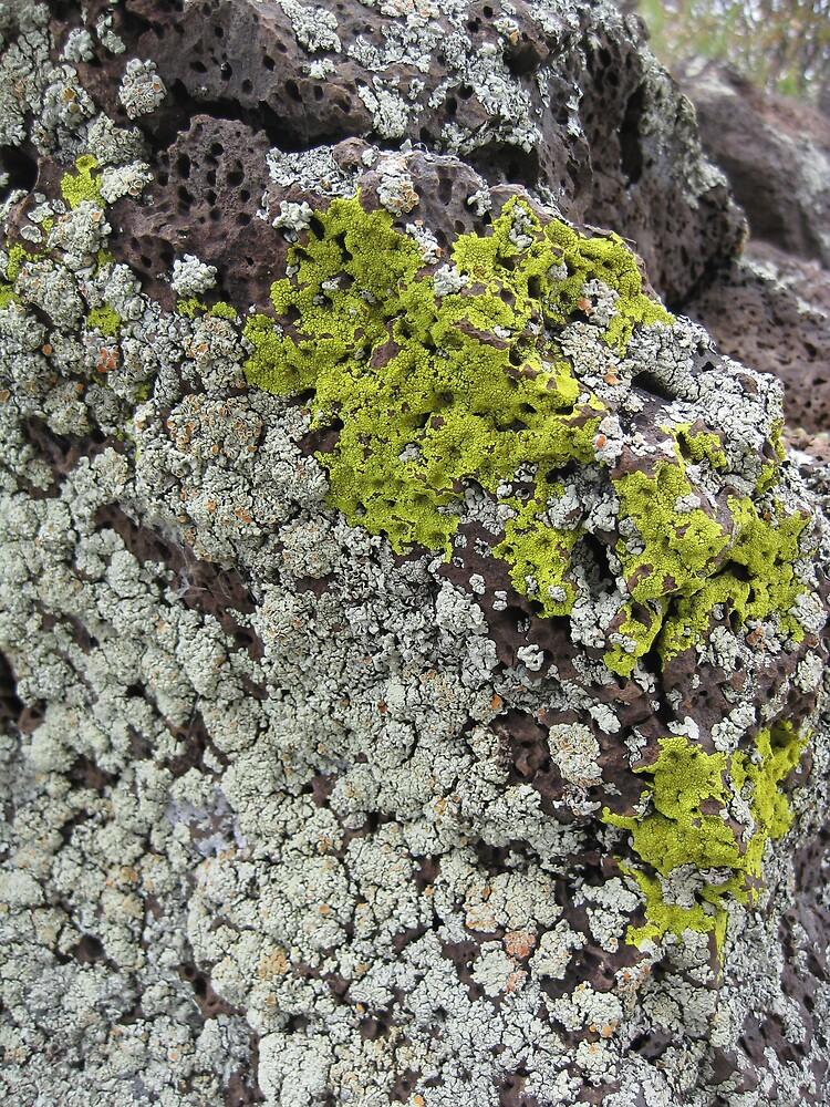 Mossy rock by Elizabeth McCoy