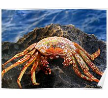 Crab! Poster