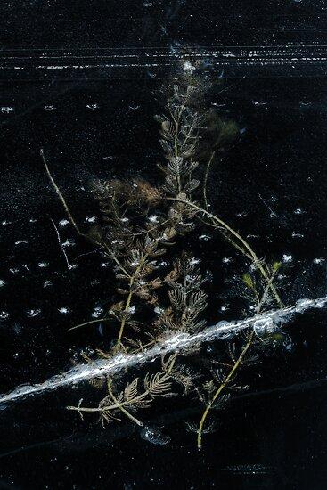 frosty prison by Manuel Wieczorek