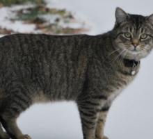 Cat in snow   Sticker