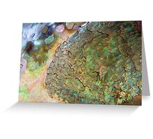 Abalone Greeting Card