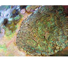 Abalone Photographic Print