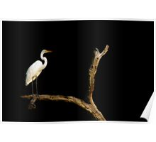 Egret in the Night Poster