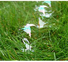 A Tidy Line Of Bubbles Photographic Print
