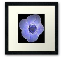 Purple Anemone Flower Framed Print