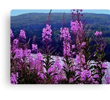 Fireweed (Hope After Fire) Canvas Print