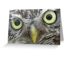 Little Owl Eyes Greeting Card