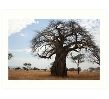 Baobab  Tree Art Print