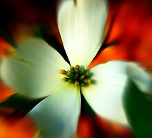 Blur of Spring by Lisa Taylor
