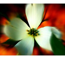 Blur of Spring Photographic Print