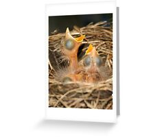 4 Blind Birds Greeting Card