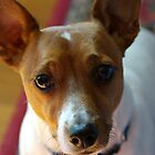 rusty dog by Simon Hawdon