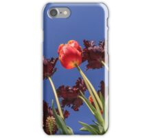 Tulips, tulips, tulips iPhone Case/Skin