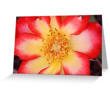 red white yello flower Greeting Card