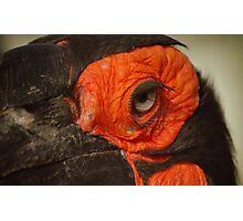 Nice lashes Photographic Print