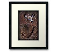 Brush Dweller Framed Print
