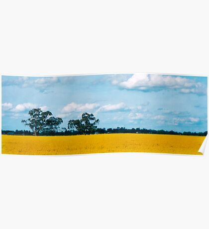 Field of gold Poster