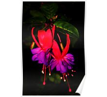 Fuschia Magic Poster