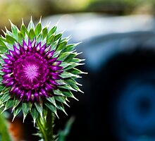 Thistle and Tractor by James Gray