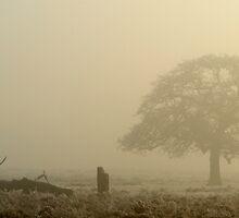 Dreamy Bushy Park Morning by Kasia Nowak