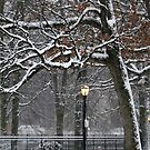 March Snow in New York City  by Alberto  DeJesus