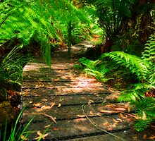Dellyes Dell walking track by Jennifer Craker