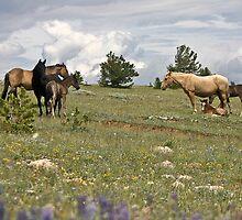 Wild Horse Herd by Ken McElroy