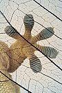 Gecko-paw by jimmy hoffman