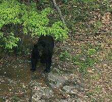 North Carolina Black Bear by Karen Kaleta