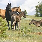 Wild Horses of Montana by Ken McElroy