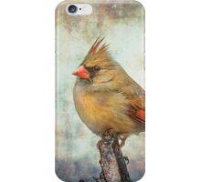 Female Cardinal iPhone Case/Skin