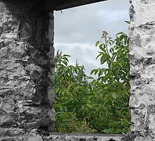 through the window by funkybunch