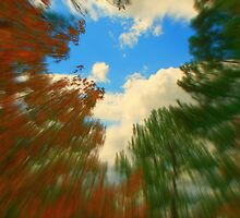 Zoom to the Autumn Sky by Lisa Taylor